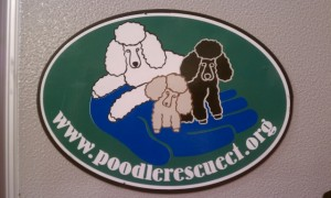 Great gift for each person who adopts a Poodle!